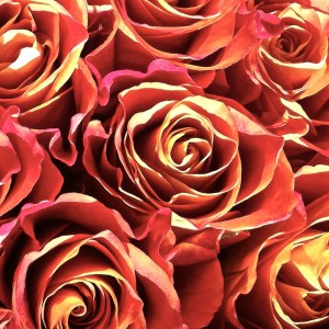 """Red Orange Rose Yellow Abstract"" by LTPhotographs, Etsy Store. (Link to website embedded within photo.)"