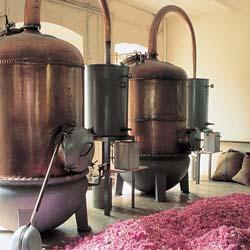 Attar distillation. Source: Broken Earth Naturals.