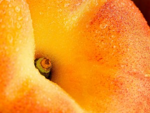 Apricot. Source: forwallpaper.com