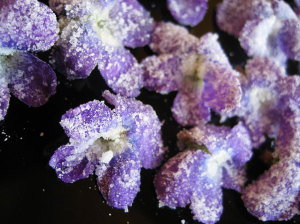 Candied violets via permaculture.co.uk