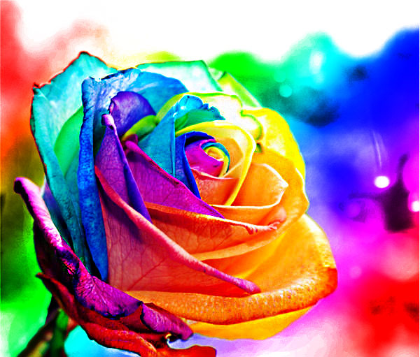 Morph parfums cruda rollercoaster rose kafkaesque for Pictures of rainbow roses