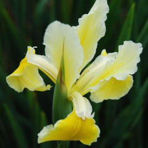 Source: .plant-world-seeds.com