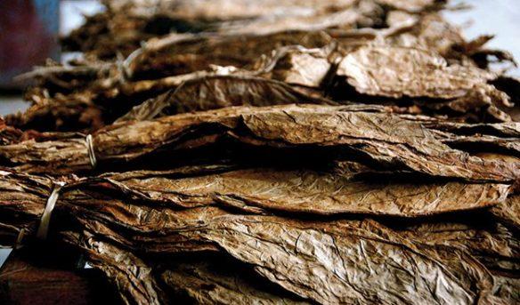 Photographer unknown. Perhaps Eric Piras. Source: tobaccoasia.com