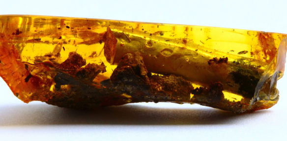 Baltic Amber fossil with inclusions. Source: Wikipedia.