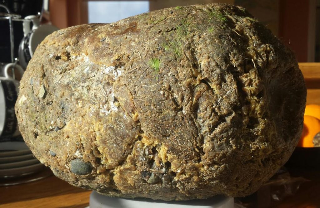 """Photo: Patrick Lillis. 3kg of """"stinky"""" ambergris """"sludgy"""" which means it's soft and smushy in texture. Please note the frond-like, vegetal greenness at the very top."""