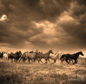 """""""Stampede"""" by Blackwater Studio via Fine Art America. Original seems to be by photographer Adam Jahiel, """"The Last Cowboy Series."""" (Jahiel website link embedded within.)"""